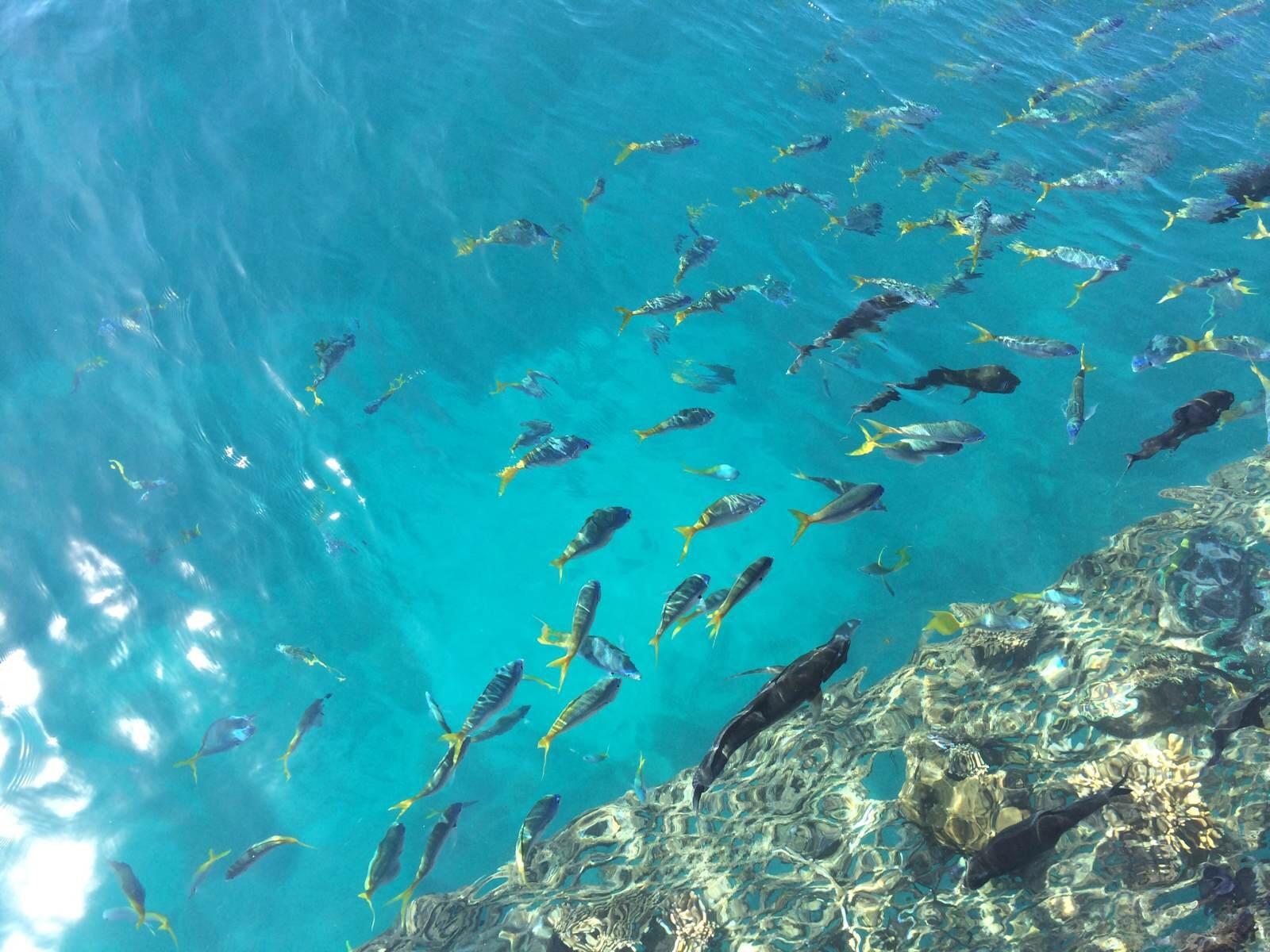 衡水绿岛游泳馆深水区.图片
